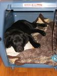 Luna taking a nap (2 mon)