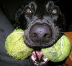 Holly 2 Balls  Chip X Dottie '03