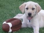 Lexi in Arizona - It's football season!