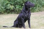 Rip- Bob Grill pup from Razz Emmitt 2012