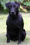 Rip Razz Emmitt \'12 bob Grill pup